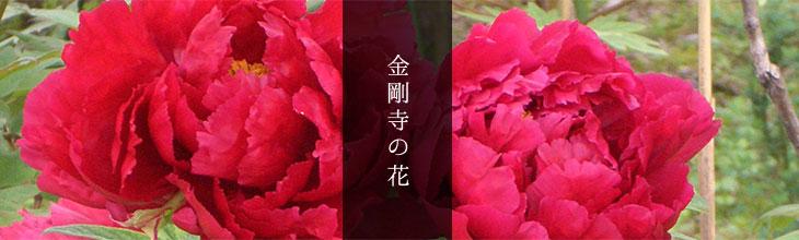 金剛寺のお花